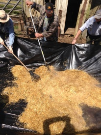 Raking Straw